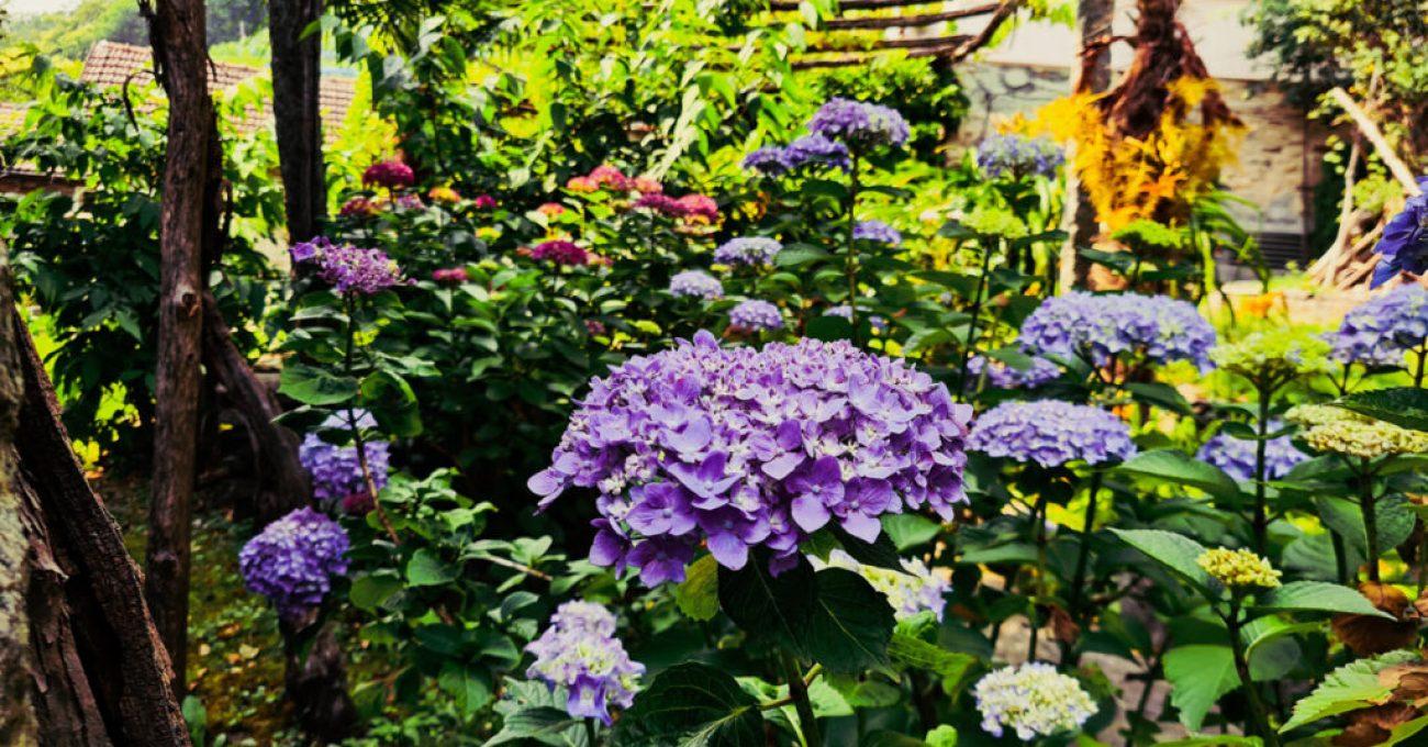 Tenuta Casa Cima, our Garden